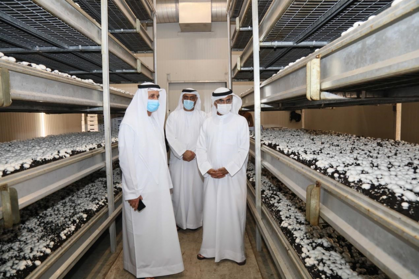 Agri-tech, MEP and HVAC, Minister of Climate Change and Environment, MOCCAE